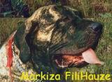 Питомник Markiza FILIHauze